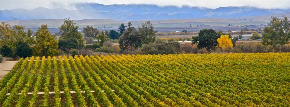Hollister Area Vineyard