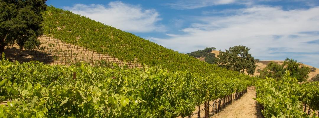 Hollister Vineyard